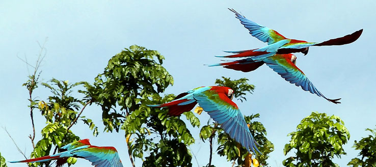 Vogels Spotten | Kabalebo Nature Resort